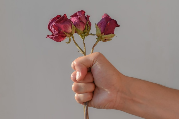 Bouquet de roses séchées, serré dans la main, gros plan. la main de l'homme tient fermement trois roses séchées. espace pour le texte.