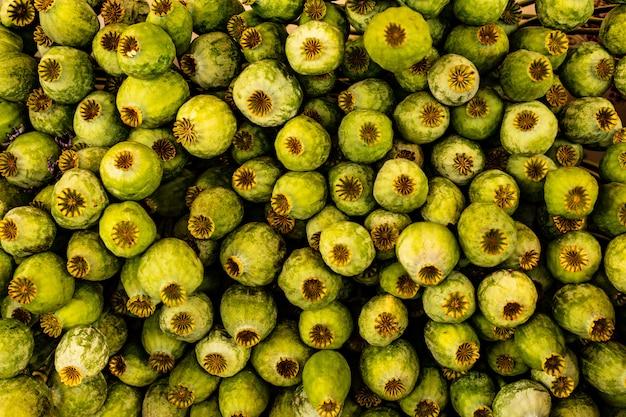 Bouquet serré de têtes de pavot vertes