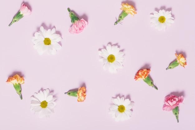 Bouquet de têtes de camomille et d'oeillet