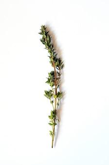 Bouquet de thym frais