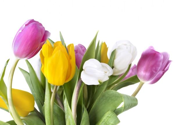 Bouquet de tulipes colorées