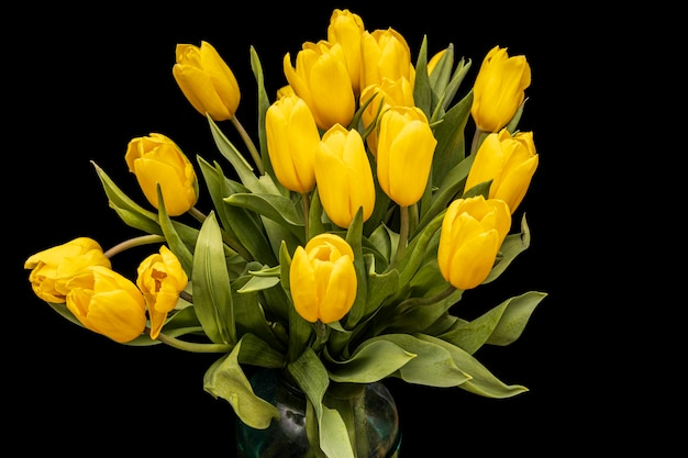 Bouquet de tulipes jaunes sur fond noir. belles fleurs. plante de jardin. photo de haute qualité