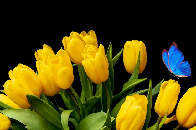 Bouquet de tulipes jaunes avec un papillon bleu sur fond noir. fleurs dans le jardin. carte postale de papillon de nuit. photo de haute qualité