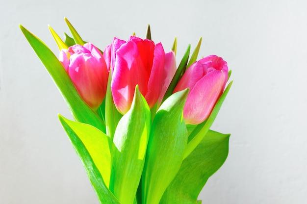 Bouquet de tulipes roses sur fond clair
