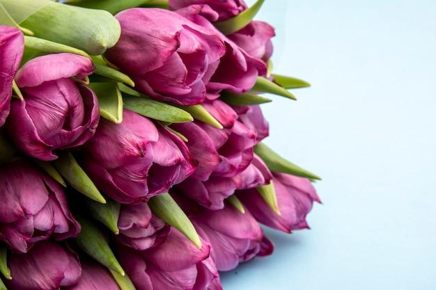 Bouquet de tulipes roses / fond de jour de pâques. bouquet de tulipes sur fond bleu, bannière web
