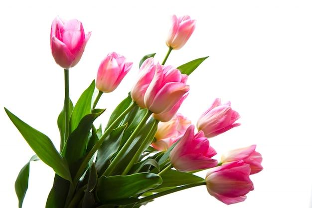 Bouquet de tulipes roses isolé sur blanc