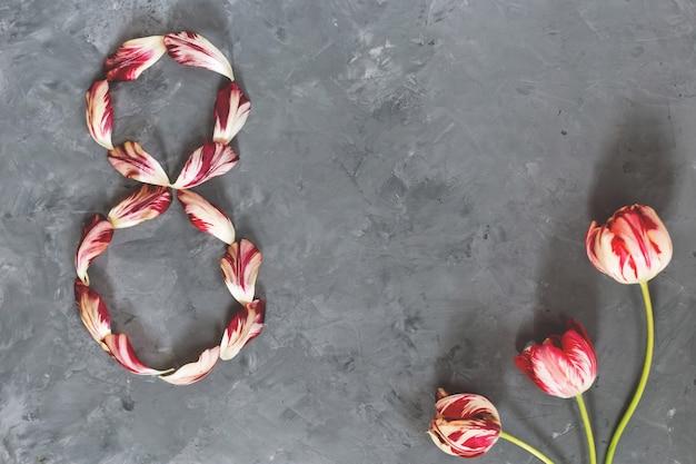 Bouquet de tulipes rouges et blanches, numéro 8 de pétales de tulipes sur mur gris. copiez l'espace pour le texte, vue de dessus