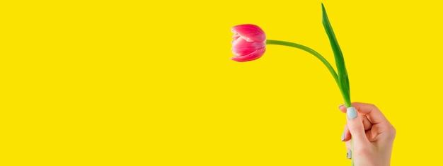 Bouquet de tulipes rouges sur fond jaune. carte de voeux de pâques et de printemps concept de jour de femme espace copie pour le texte. bannière de printemps