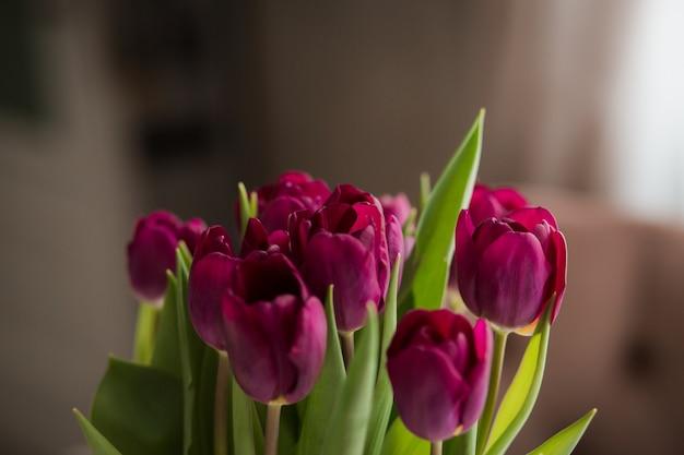 Bouquet de tulipes violettes