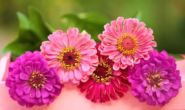 Bouquet de zinnias roses et violets sur vert flou