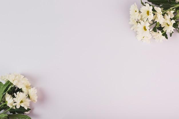 Bouquets de camomille