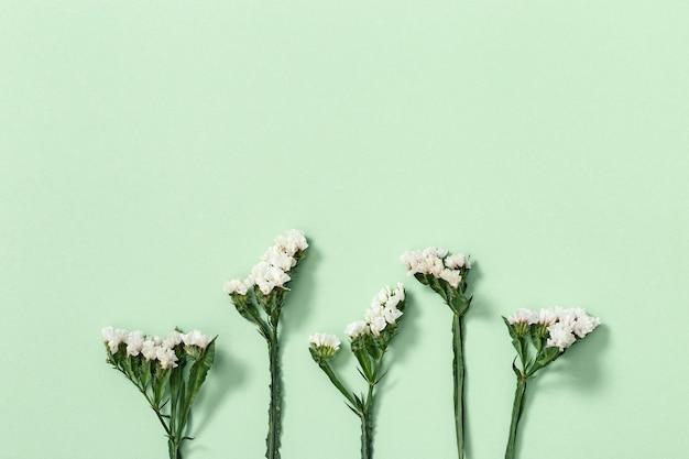 Bourgeon de plan rapproché de feuilles de limonium de fleur sèche et de petite fleur sur la surface verte