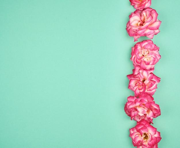 Bourgeons en fleurs de roses roses sur vert