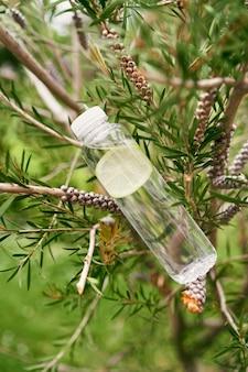 Une bouteille d'eau au citron se trouve sur les branches d'un arbre parmi le feuillage vert
