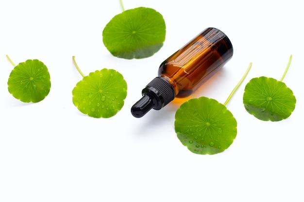 Bouteille d'huile essentielle avec des feuilles de centella asiatica vertes fraîches sur fond blanc.