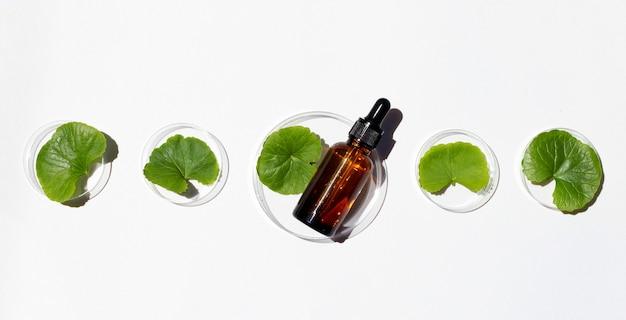 Bouteille d'huile essentielle avec des feuilles fraîches de gotu kola dans des boîtes de pétri sur fond blanc.