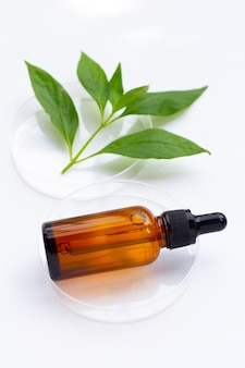 Bouteille d'huile essentielle avec des feuilles vertes de kariyat ou d'andrographis paniculata dans des boîtes de pétri sur blanc