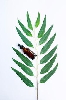 Bouteille d'huile d'eucalyptus avec une branche d'eucalyptus sur fond blanc.