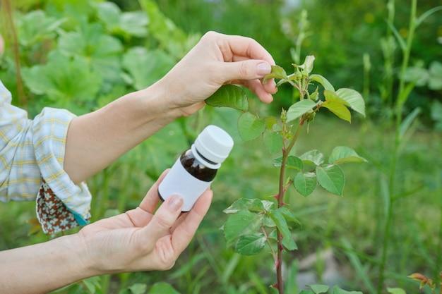 Bouteille d'insecticide chimique dans le jardinier main close-up