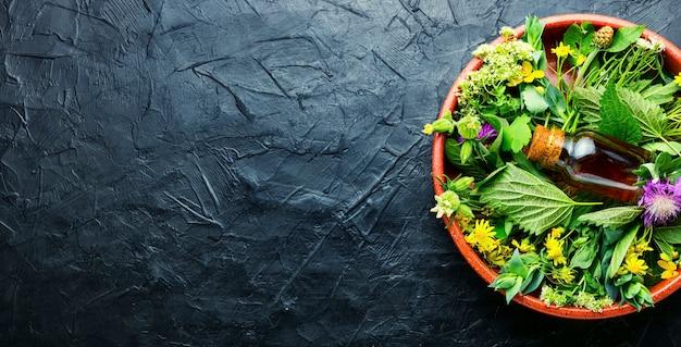 Bouteille de teinture de guérison d'herbes sauvages médicinales.phytothérapie.copy space