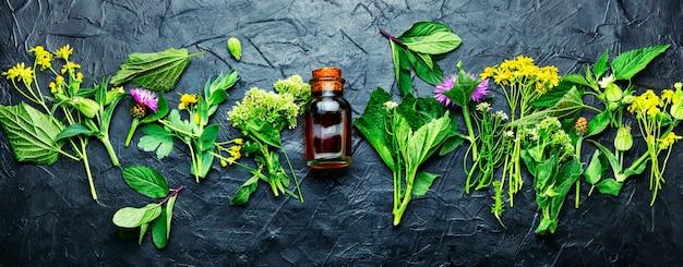 Bouteille de teinture de guérison d'herbes sauvages médicinales. phytothérapie