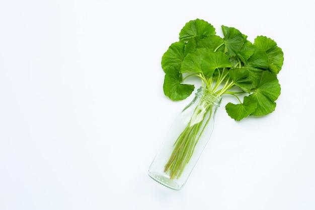 Bouteille en verre avec gotu kola vert frais sur fond blanc.