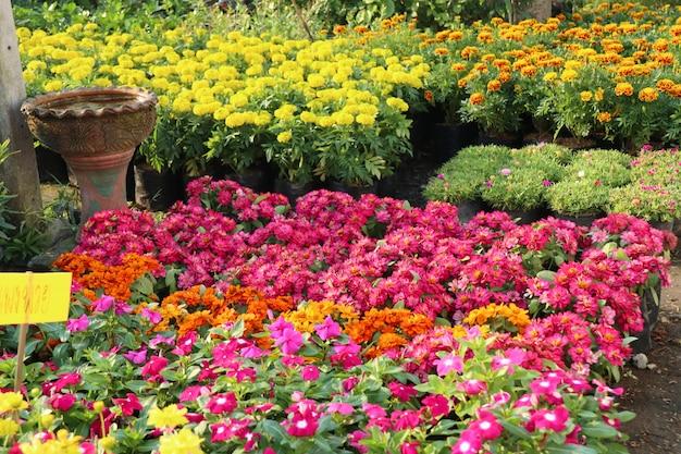 Boutique de fleurs à vendre