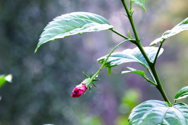 Bouton de fleur en fleur dans le jardin par une belle journée ensoleillée