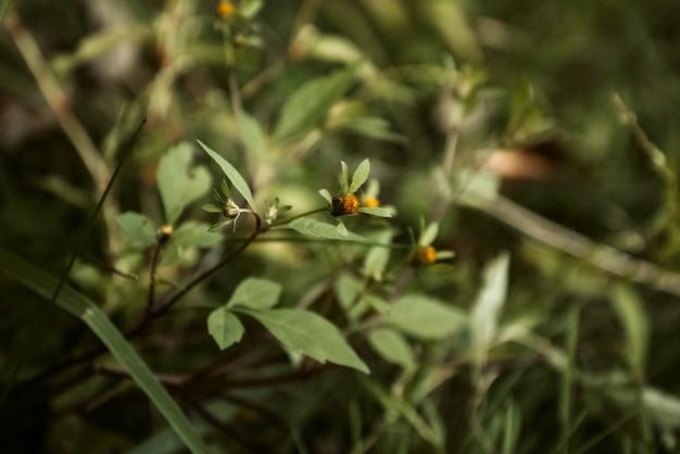 Bouton floral d'automne parmi l'herbe verte se bouchent