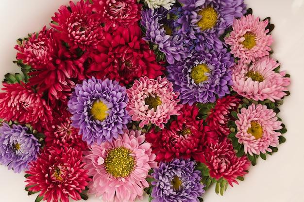 Boutons de fleurs de chrysanthème rose, rouge et violet flottant dans un bol blanc avec de l'eau. mise à plat naturelle minimale.