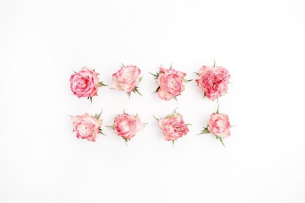 Boutons de fleurs roses rouges sur fond blanc. mise à plat, vue de dessus