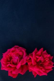 Boutons de rose sur fond noir arrangement floral plat pour l'espace de copie de texte