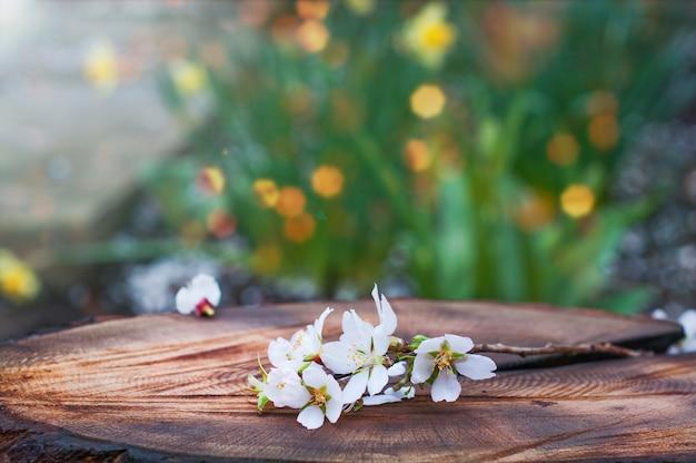 Branche d'amandes en fleurs se trouve sur une souche d'arbre