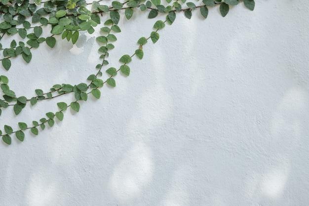 Branche d'arbre au feuillage vert sur le vieux mur de ciment