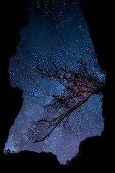 Branche d'arbre avec ciel nocturne