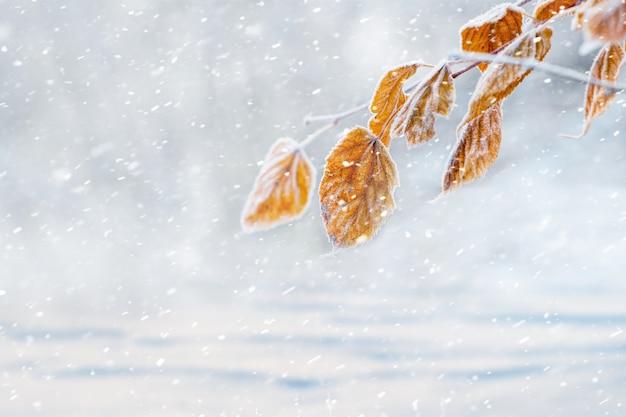 Branche d'arbre couverte de givre avec des feuilles sèches sur fond flou pendant les chutes de neige, l'hiver et le fond de noël