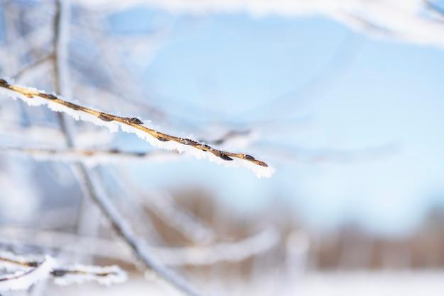 Branche d'arbre couverte de neige avec des bourgeons sur un fond de ciel bleu.