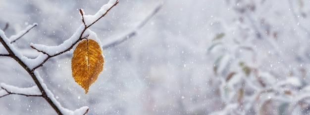 Branche d'arbre couverte de neige avec une feuille fanée dans le jardin sur un arrière-plan flou lors d'une chute de neige, fond de noël d'hiver