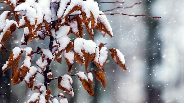 Branche d'arbre couverte de neige avec des feuilles sèches sur un arrière-plan flou lors d'une chute de neige