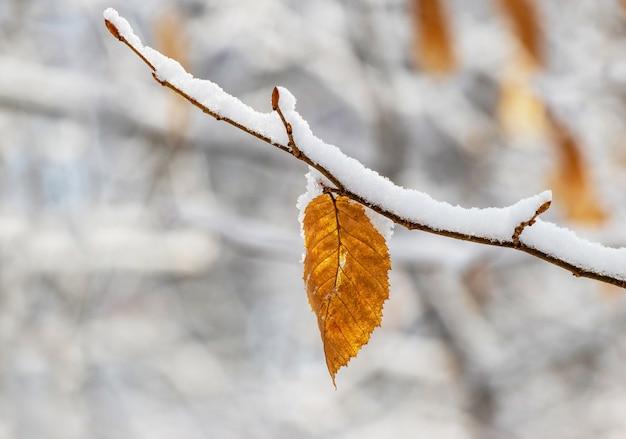 Branche d'arbre couverte de neige avec des feuilles sèches dans la forêt d'hiver