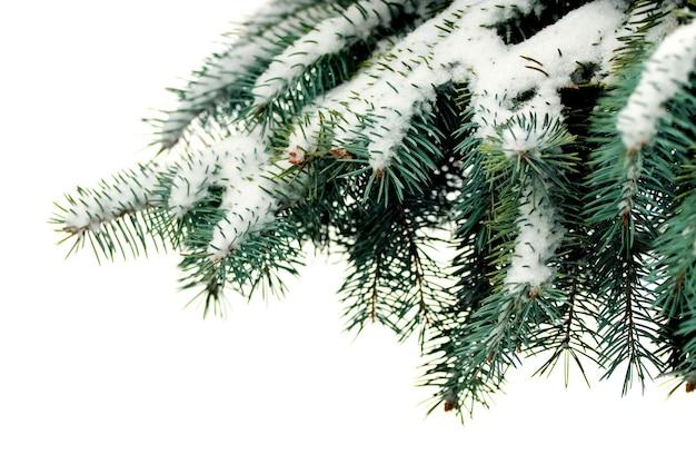 Branche d'arbre couverte de neige sur fond blanc