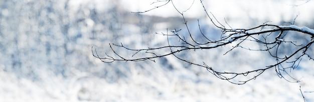 Branche d'arbre couverte de neige en hiver sur fond clair, panorama