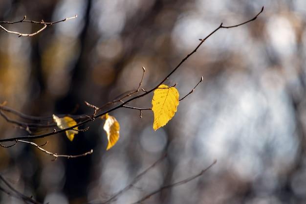 Branche d'arbre avec les dernières feuilles d'automne dans une forêt sombre