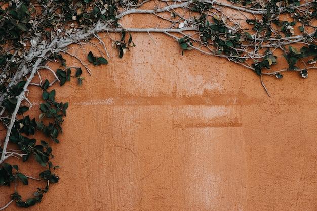 Branche d'arbre et feuillage vert sur le vieux mur plâtré de ciment.