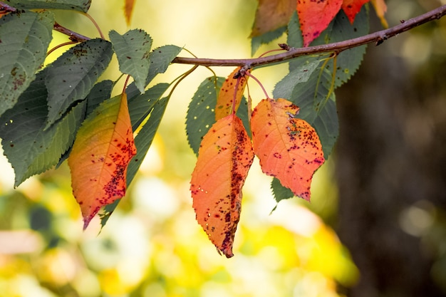 Branche d'arbre avec des feuilles d'automne colorées