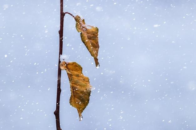 Branche d'arbre avec des feuilles fanées pendant les chutes de neige