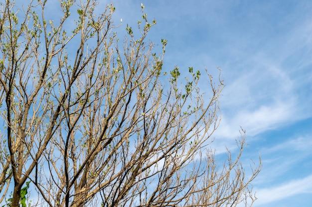 Branche d'arbre et feuilles sèches au printemps