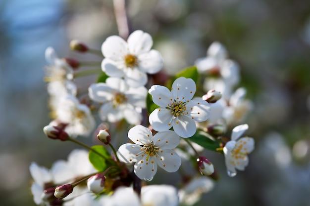Branche d'arbre de fleurs