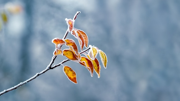 Branche d'arbre givrée avec des feuilles sèches