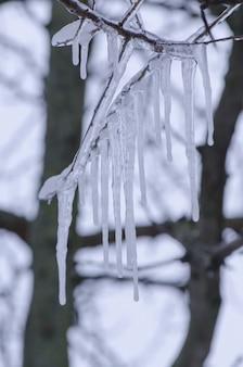 Branche d'arbre avec des glaçons